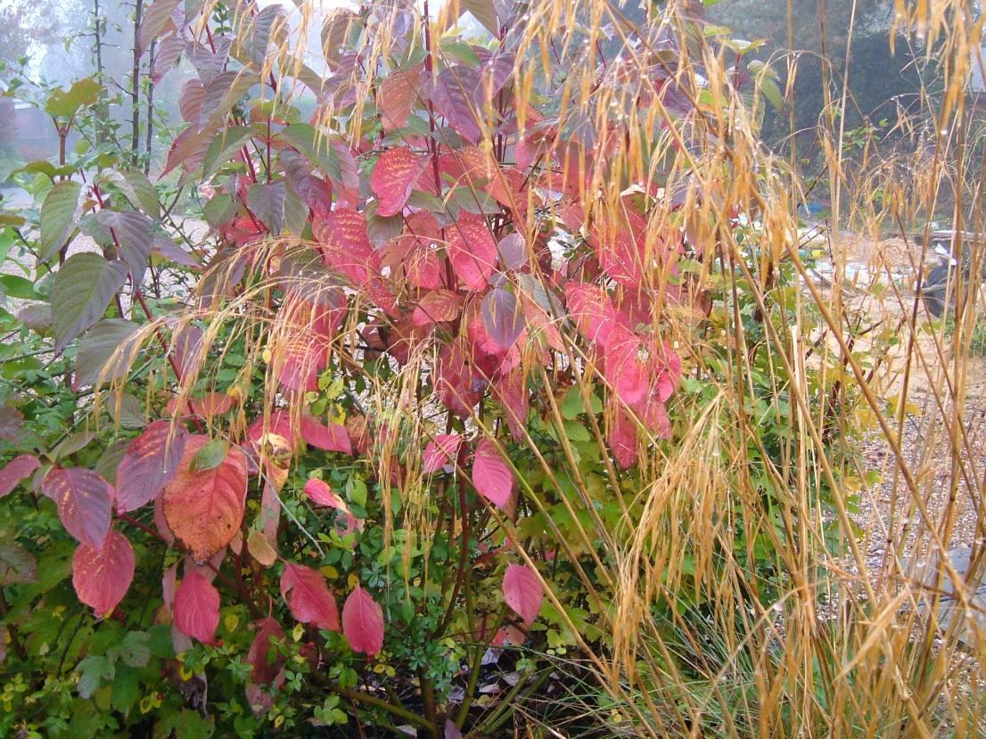 Late autumn colours