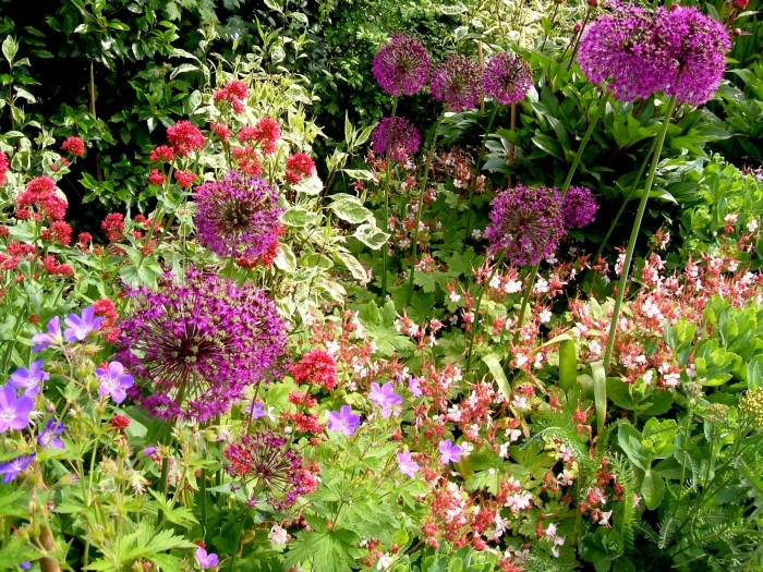 Alliums, geraniums, and a hint of red valerian