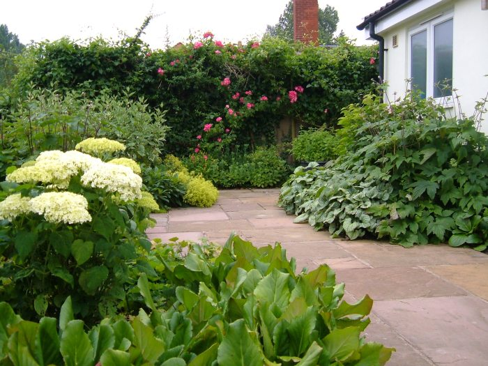 The back garden in July 2013