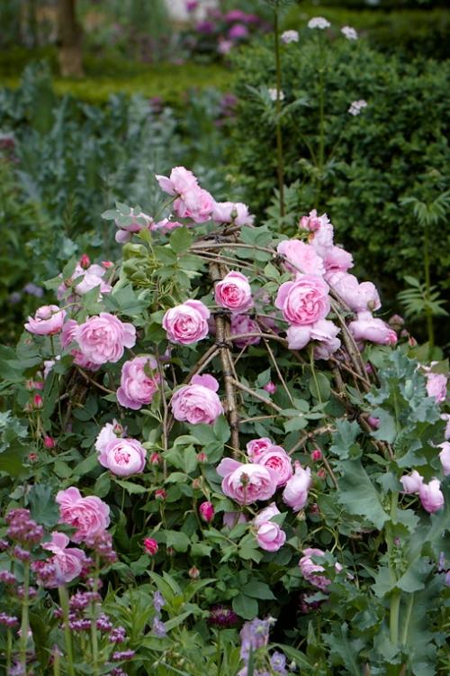 Hazlewood rose support