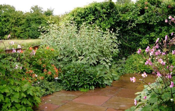 A grateful garden