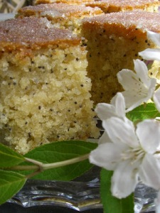 Sticky Lemon and Poppy Seed Cake, Dan Lepard