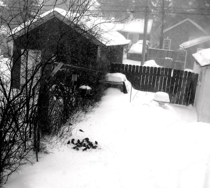 14.2.13 Blizzard, hungry birds