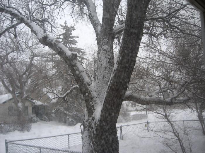 14.2.19 Morning snow