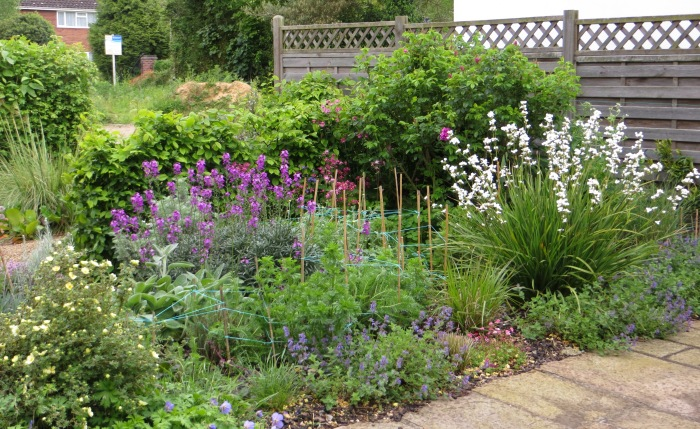 The front garden in 2014