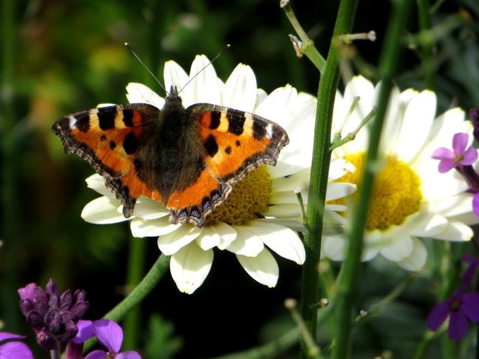 Butterflies in June