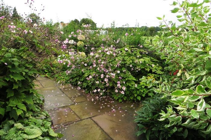 North-facing terrace garden in late summer