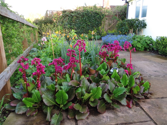North-facing terrace garden in spring