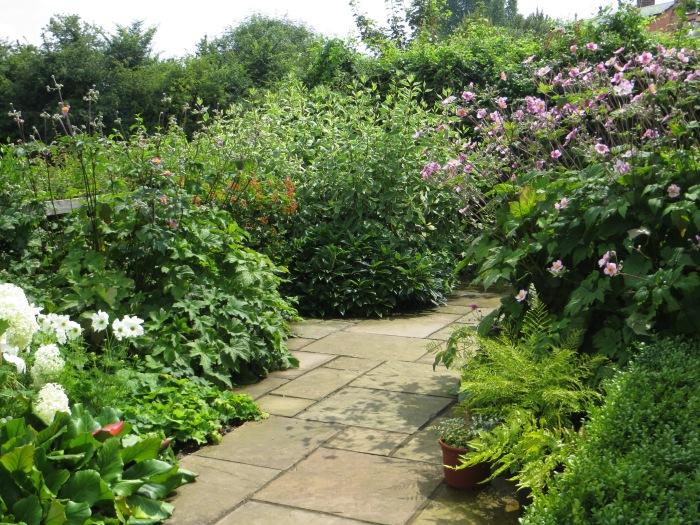 North-facing terrace garden in summer