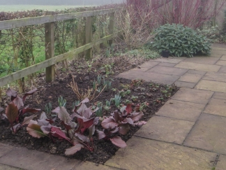 Replanted bed