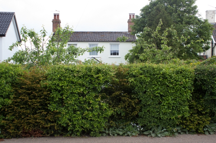 The front hedge today