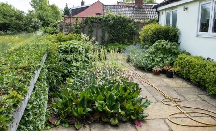 The back garden today