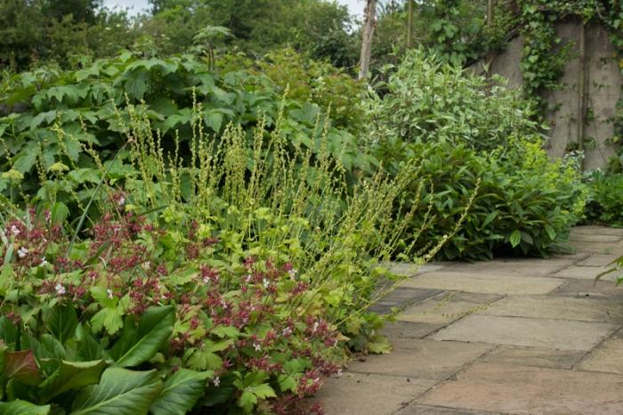 Bergenias, Tellima Grandiflora, Japanese Anemones, Viburnum davidii, and Cornus Alba 'Elegantissima'