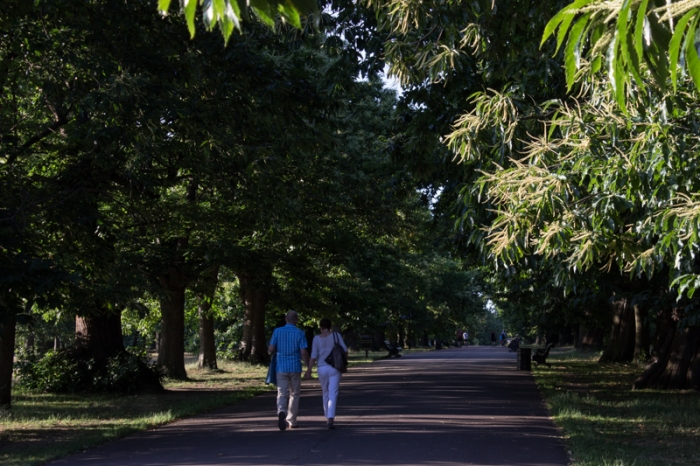 Chestnut Tree Avenue in Greenwich Park