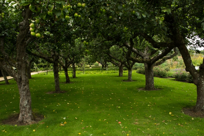 The Old Apple Orchard in the Walled Garden