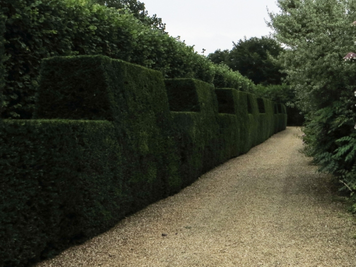 Manicured hedging in the Walled Garden