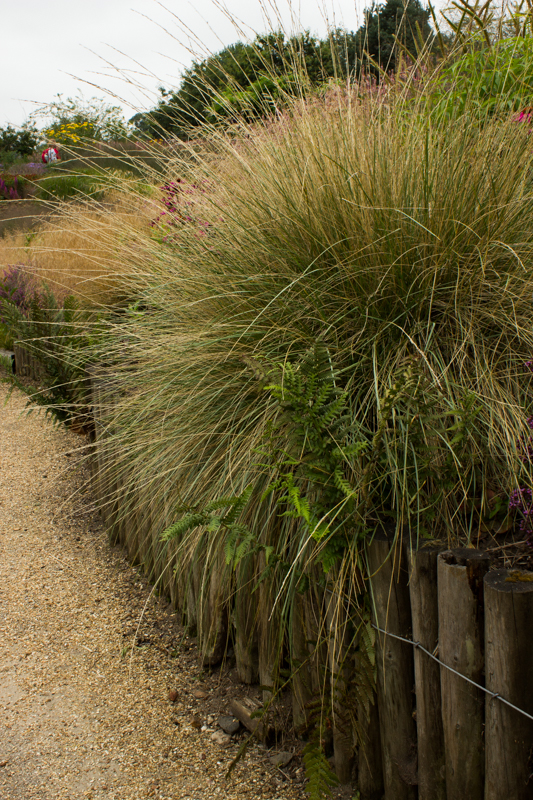 Carex, Pensthorpe