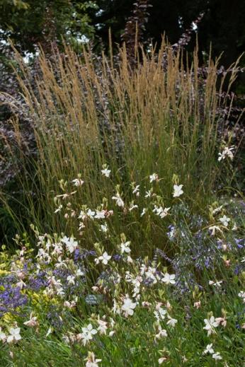 Calamagrostis & Gaura