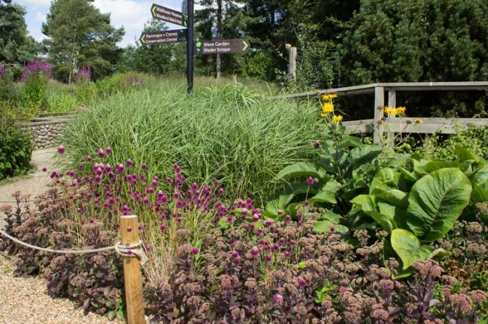Miscanthus, Alliums, & sedum