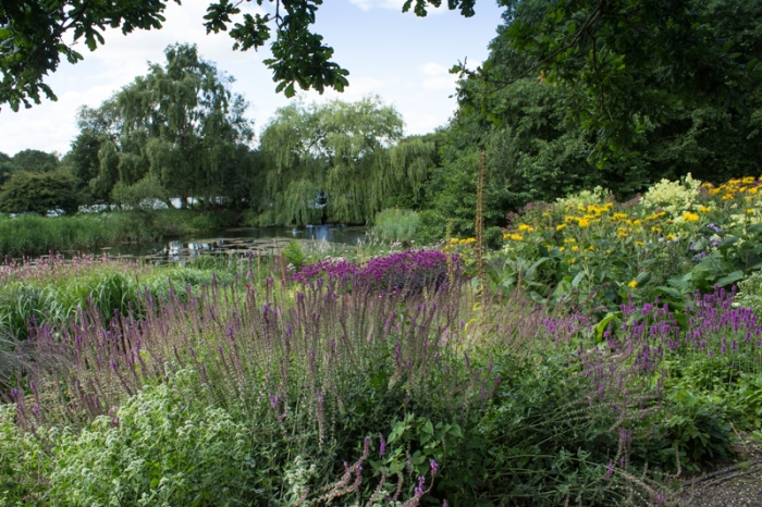 A view from the Millennium Garden over the lily pond at Pensthorpe
