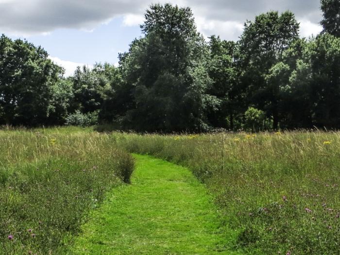 The Wildflower Meadow, Pensthorpe
