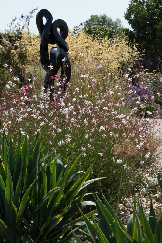 Gaura Lindheimerei and Stipa Gigantea at Hyde Hall