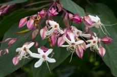 Very sweet-smelling shrub, almost like jasmine