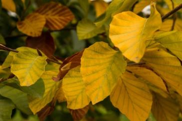 Greenwich Park in autumn