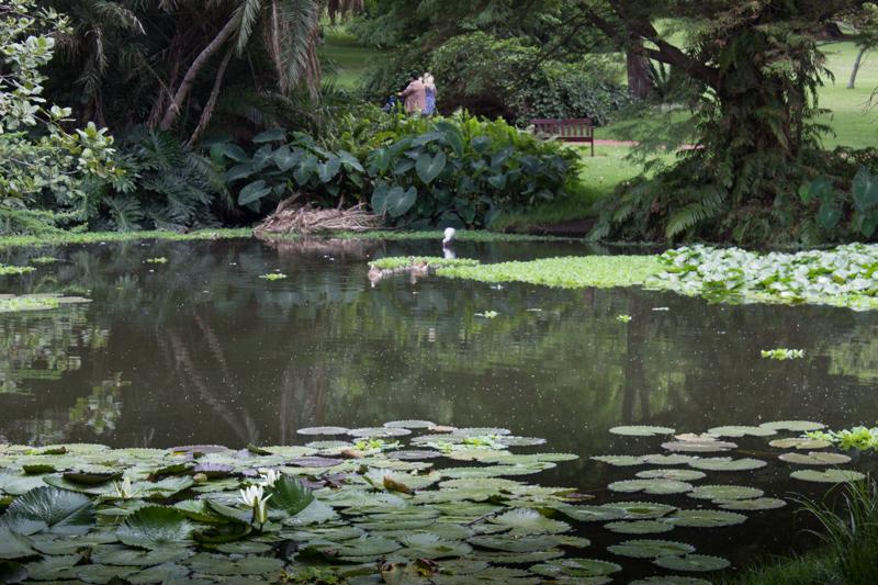 The lake, Durban Botanic Gardens
