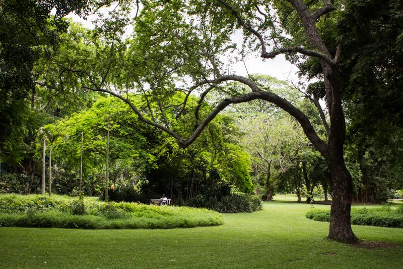 Trees in Durban Botanic Gardens
