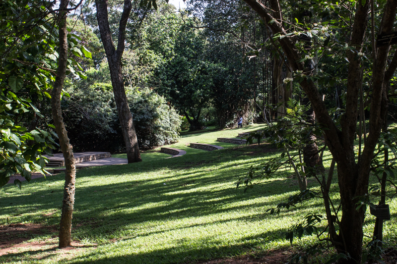 The Amphitheatre, Durban Botanical Gardens