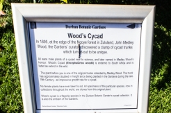 Wood's original cycad