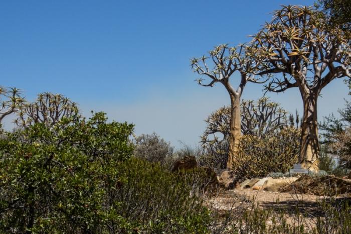 Karoo Desert Botanic Gardens