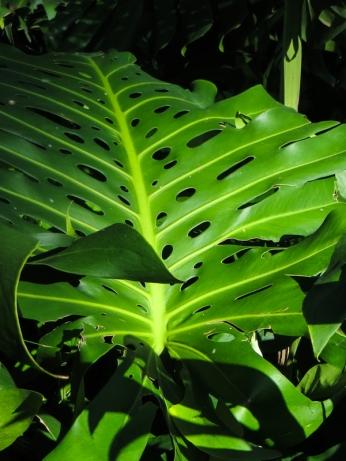 16-2-30 Durban Botanic Gardens LR-8628