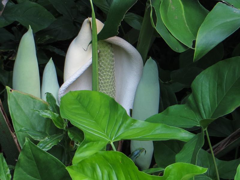 16-2-30 Durban Botnic Gardens LR-8625