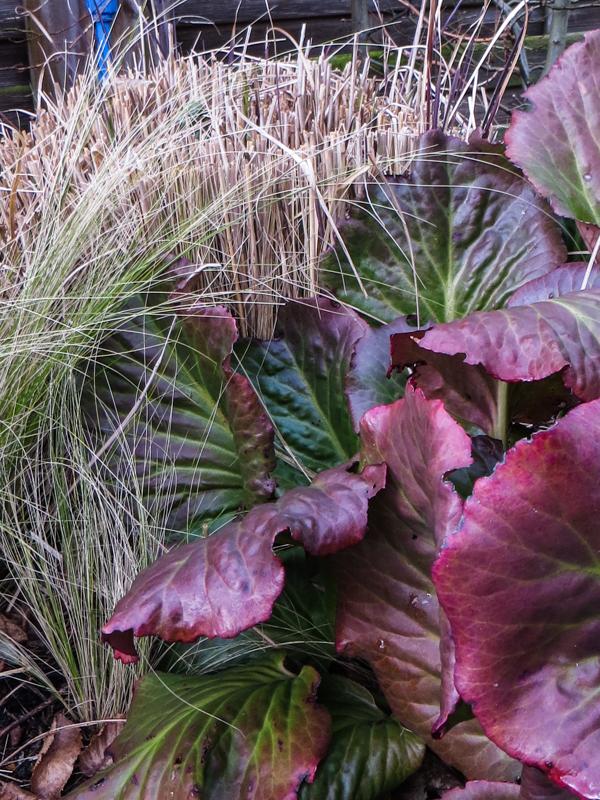 Grasses & Bergenia