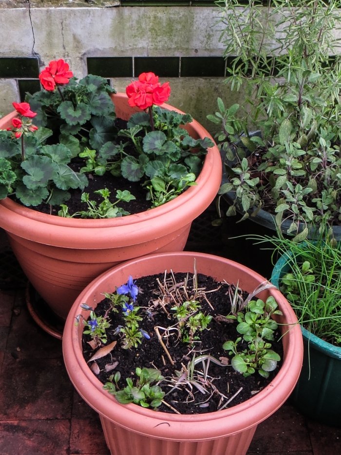 The pots in 'The Fernery'