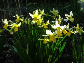 February Gold