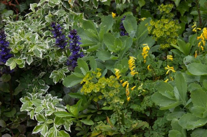 16-5-16 Back garden, Monk Frith LR-4178