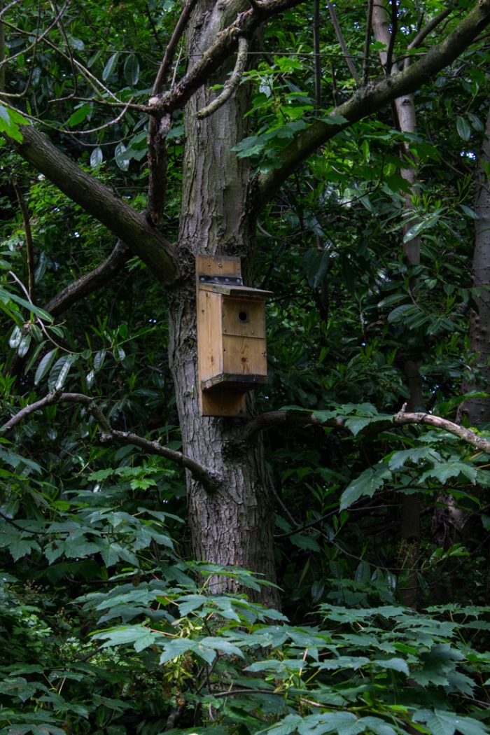 Bird boxes in Stave Hill Ecology Park