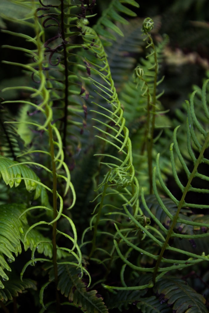 Ferns in Canary Wharf Roof Garden