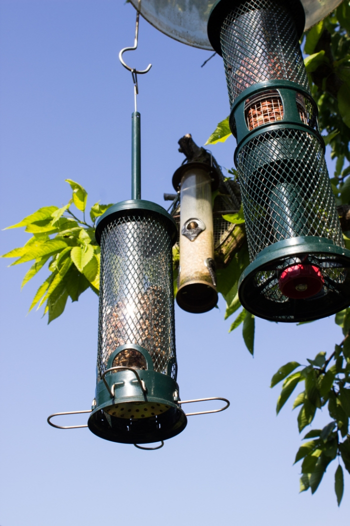 16-6-6 Cable Street Community Gardens LR-5555