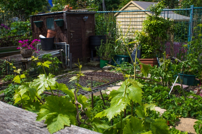 Cable Street Community Gardens