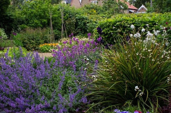 Monk Frith Garden in June 2016