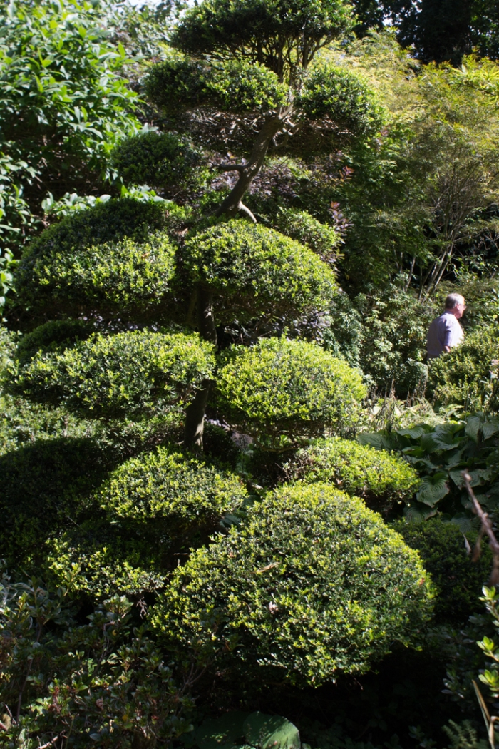 The Garden of the Rising Sun in the Parc Botanique de Haute Bretagne