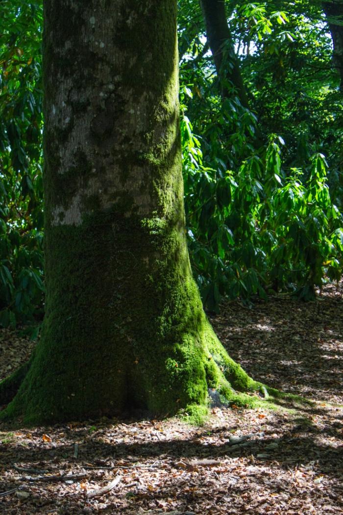 In the Bois Decisif in the Parc Botanique de Haute Bretagne
