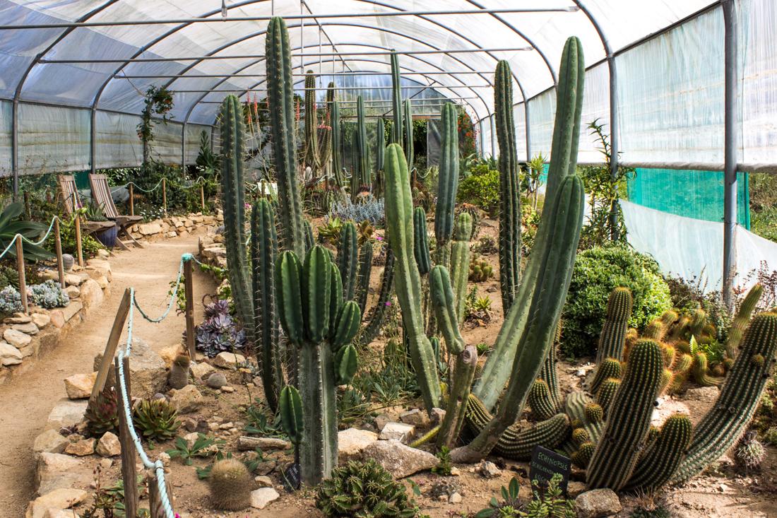 Jardin exotique et botanique roscoff enthusiastic gardener Jardin exotique