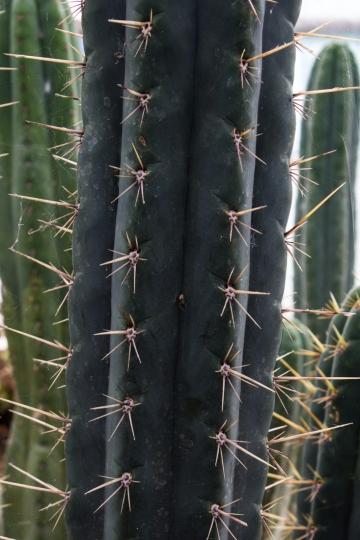 16-9-17-roscoff-exotic-garden-lr-0534