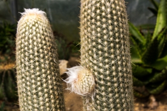 16-9-17-roscoff-exotic-garden-lr-0556