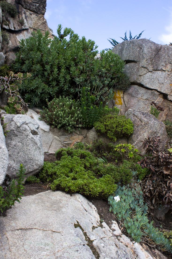 Jardin exotique et botanique roscoff enthusiastic gardener for Jardin botanique